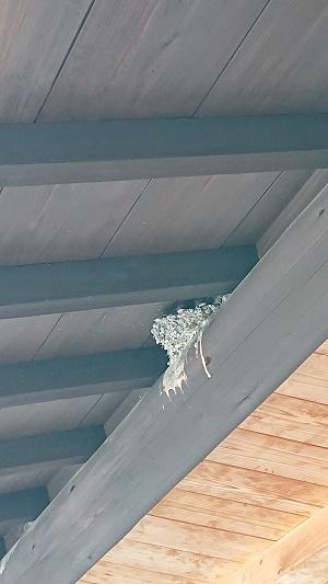 つばめの巣からヒナが顔を出しています